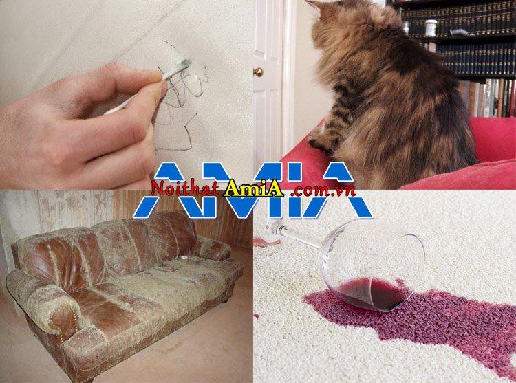 Phân biệt các loại vết bẩn trên sofa như lông động vật, bụi bẩn lâu ngày, đổ nước uống